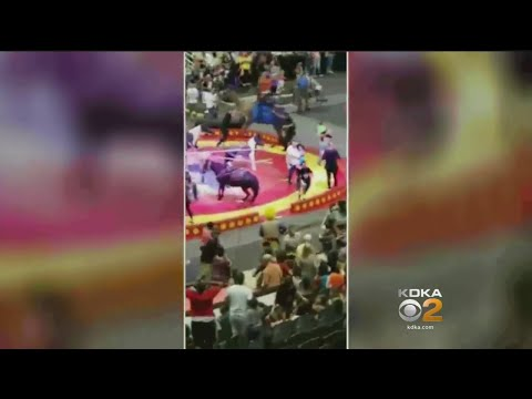 6 Children, 1 Adult Injured After Camel Is Spooked At Shrine Circus