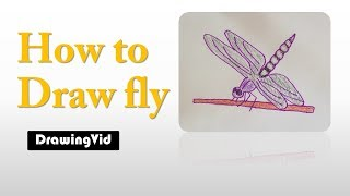 how to draw fly