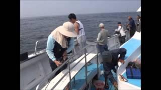 鐵板路亞卡通變態人物  紅甘 釣遊2014年4月18日鉅隆號