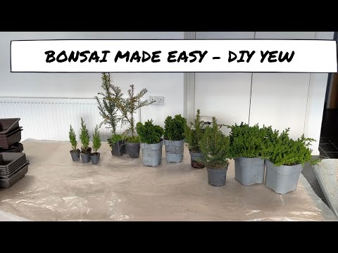 Bonsai Made Easy