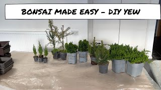 Bonsai Made Easy - DÏY Yew