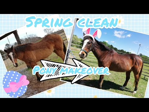 23+ YO HORSE MAKEOVER ~ SPRING CLEAN BARN EDITION ~ SLEEK EZ REVIEW