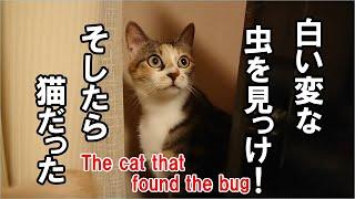 5才の雄猫が生まれて初めて捕った虫とは?!-Cat for the first time took the insect