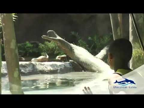 Top Travel -Discovery Cove® Orlando