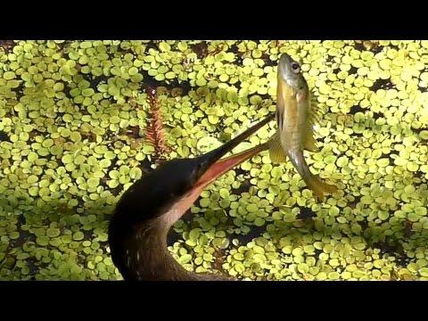 Snakebird Eats Fish FYV UHD 4K