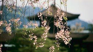 オカリナで島津亜矢が歌うイメージで藤純子の「緋牡丹博徒」を 吹いてみ...