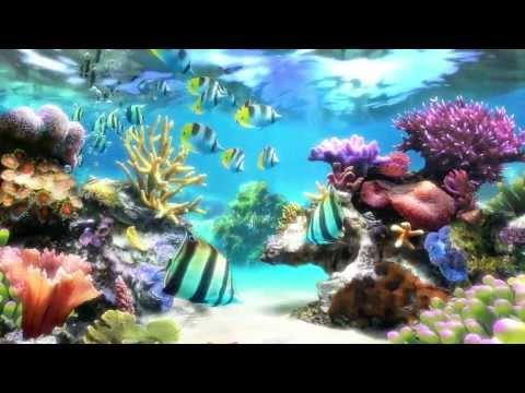 Arowana Fish 3d Live Wallpaper Digifish Aqua Real 2 1080p Screensaver Funnydog Tv