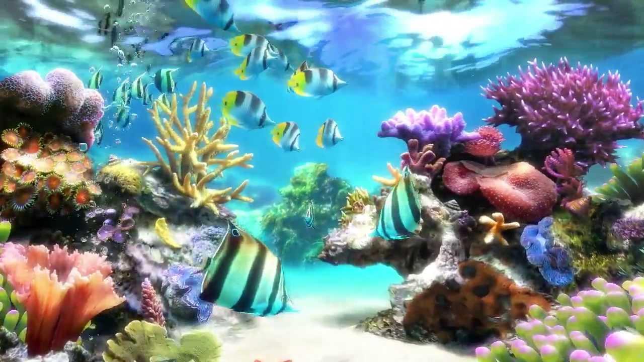 Sim Aquarium 3d Live Wallpaper Sim Aquarium Screensaver Amp Live Wallpaper Youtube
