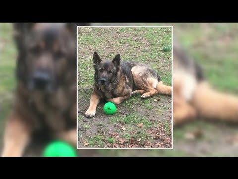 SEPTA K9 Allowed To Live With Family After Controversial Separation