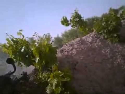Seriously close combat footage as Canadian PPCLI fight back Taliban forces.