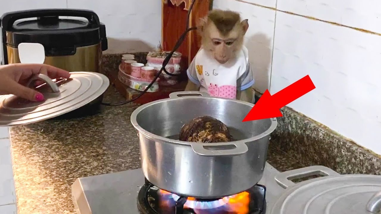 Baby Monkey | DouDou Eats Boiled Taro With Mommy Very Funny