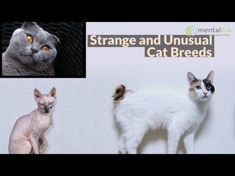 Strange and Unusual Cat Breeds