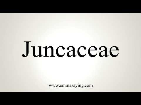 How To Pronounce Juncaceae