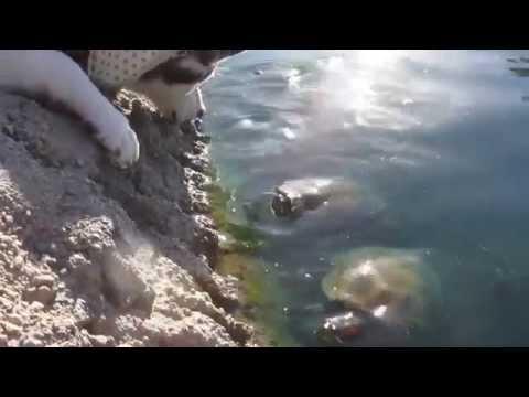 Siberian Husky Meeting Turtles