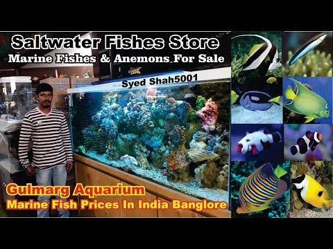 Marine Fish Aquarium Shop, Banglore Gulmarg aquarium #Salt w