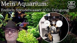 Endlich Sprudelwasser - CO2 Düngung | Mein Aquarium 21