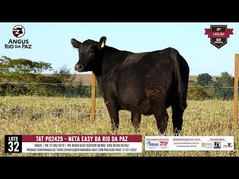 LOTE 32 PO2429 NETA EASY DA RIO DA PAZ - Prod. Agência e TV El Campo