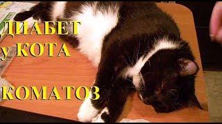Кот заболел ДИАБЕТ Гипергликемический приступ.