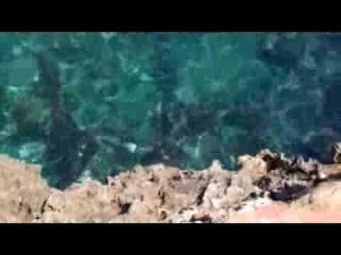 Hotel marina Corfu Mallorca Cala D'or