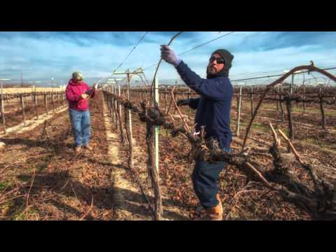 McManis Family Vineyards - Business Award Recipient - 2016 California Green Medal
