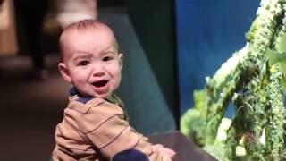 Funniest Baby and Baby Animals Fails | Baby Video Full HD