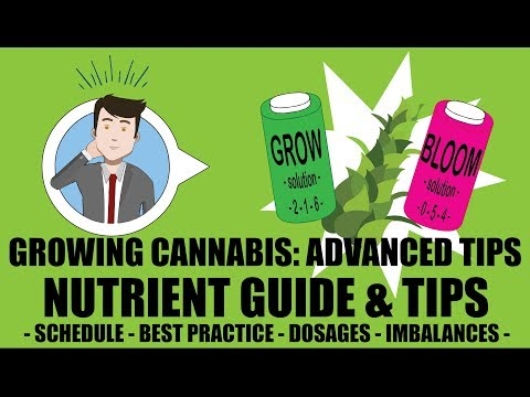 Marijuana Nutrient Guide Schedule Explained - Growing Cannab