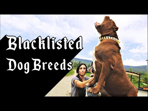 The 10 Blacklisted Dog Breeds
