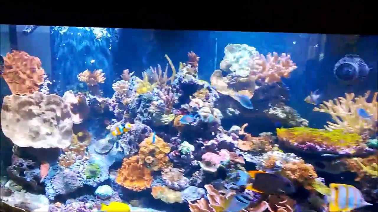 Skimmerless 175 Gallon Reef Running A Fluval 406 Canister Filter