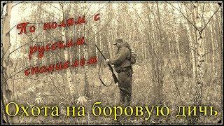 Охота на боровую дичь. С русским спаниелем по полям. Работа спаниеля по зайцу.