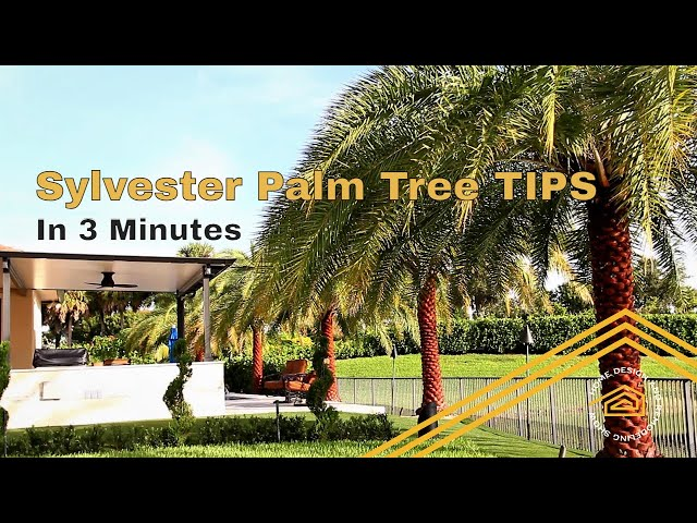 TIPS from the Sylvester Palm Tree Expert | What you should know.