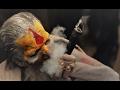 Bam Lahiri Remix|Hard Bass|Dubstep|
