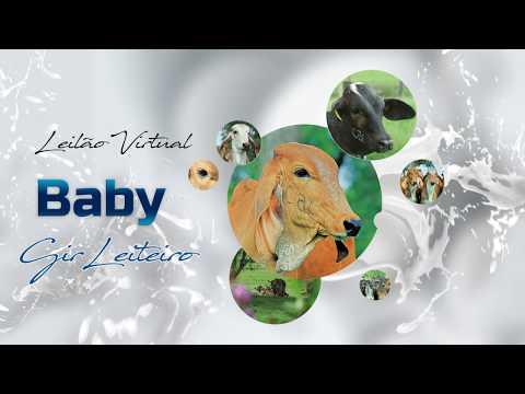 Chamada (VT) LEILAO VIRTUAL BABY GIR LEITEIRO CAL 12DEZ2019 21h