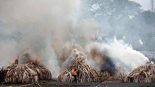 Kenya burns huge ivory stockpile calling for ban on trade