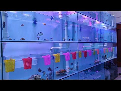 Marine Fish Prices in India