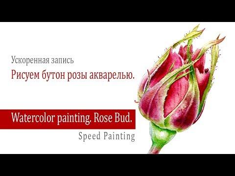 Watercolor Rosebud./ Как нарисовать бутон розы акварелью.