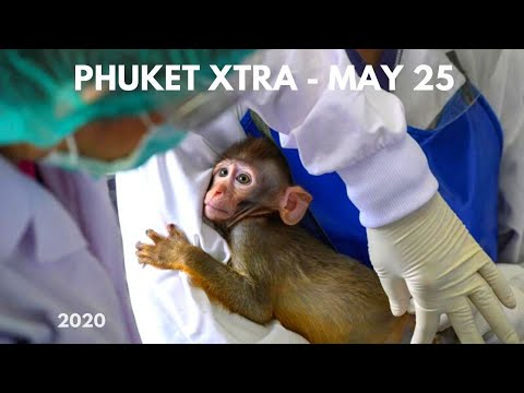 Wife Stabs Husband Over Broken Fan! Monkeys In Vaccine Trials? More Shops To Open? || Thailand News