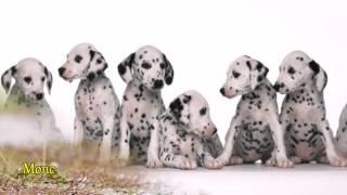 Слайд-шоу «12 самых популярных пород собак»
