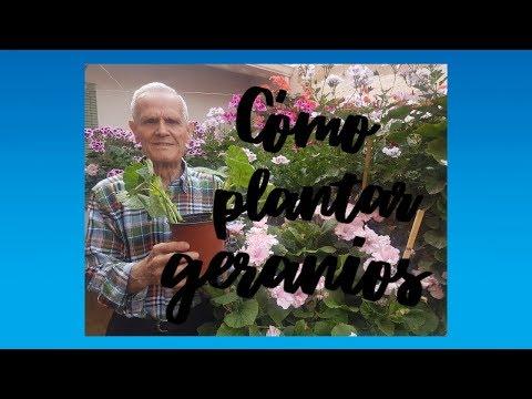 El Jardinero En Casa Geranios Y Gitanillas Doovi