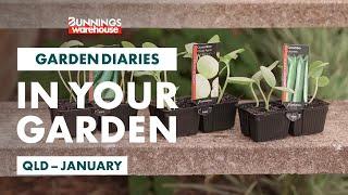 Gardening in January | Queensland | Bunnings Garden Diary