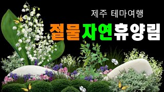 [아산TV]제주테마여행 - 절물 자연휴양림(4K) Je…