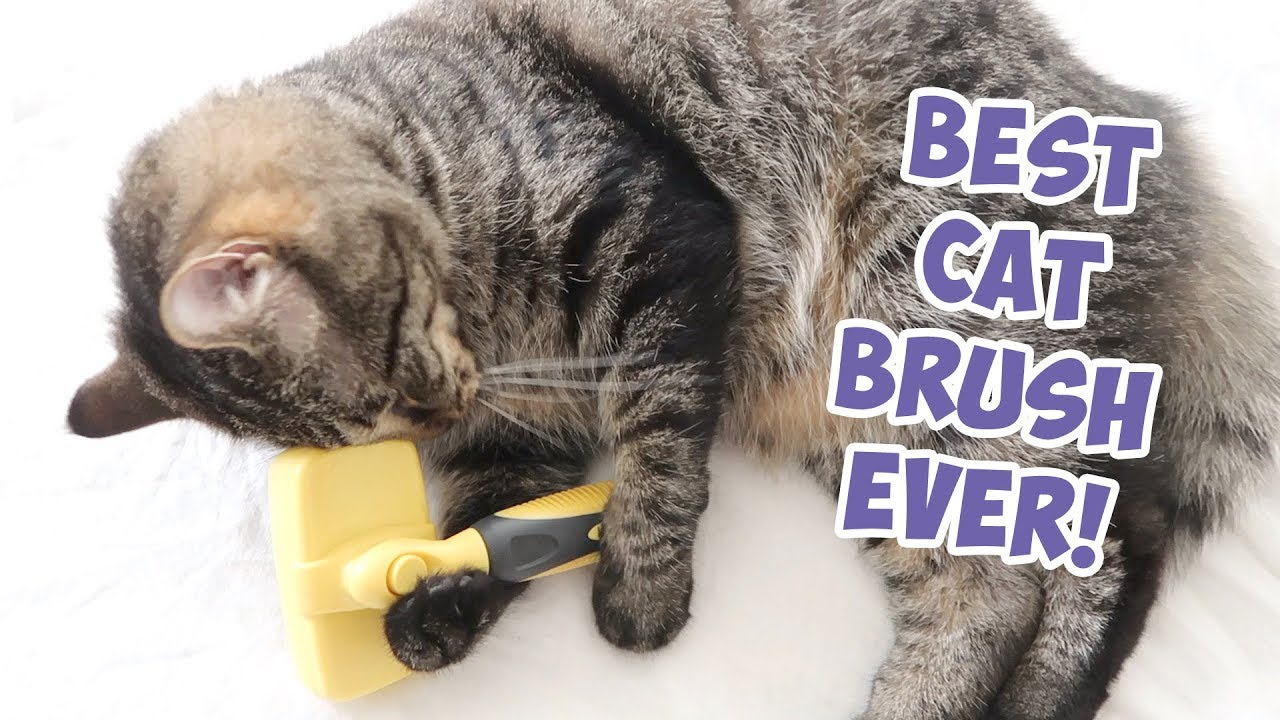 Best Cat Brush Ever Cat Slicker Brush Self Cleaning Pro Quality Grooming Comb Youtube