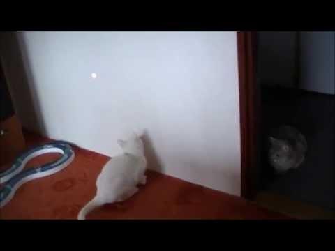 Burmilla - laser