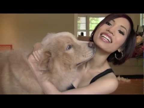 TAG: My Furry Friend (with Momo Bear!!! - Chow Chow)