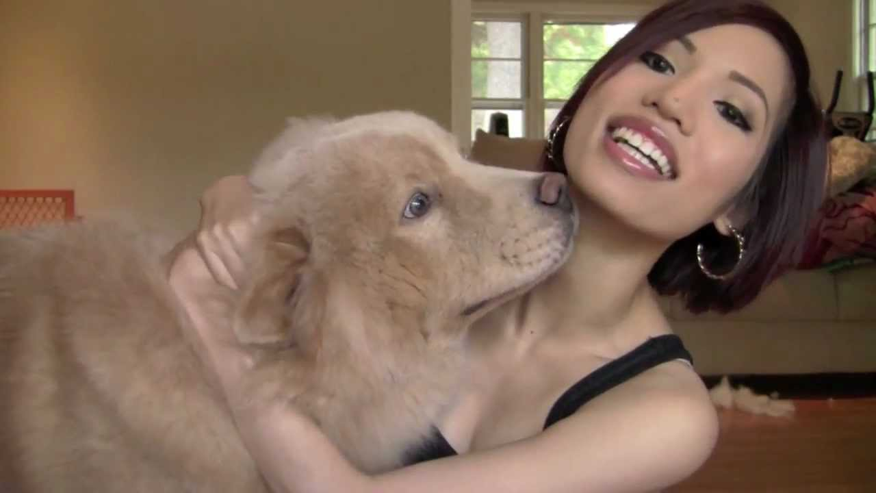 Tag My Furry Friend With Momo Bear Chow Chow Youtube