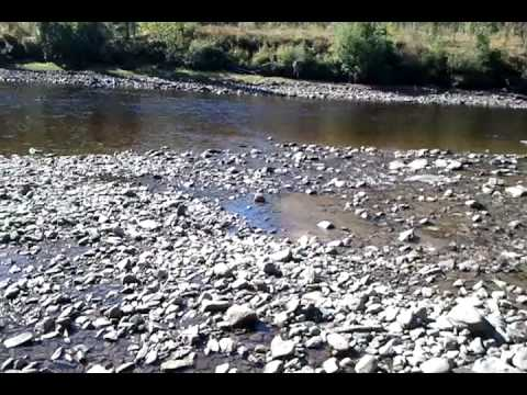 Low water on the fortymile river Chicken AK