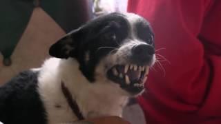 Стоимость усыпления собаки на дому