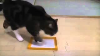 Забавное видео с кошками - Смешная Кошка играет с  коробками!