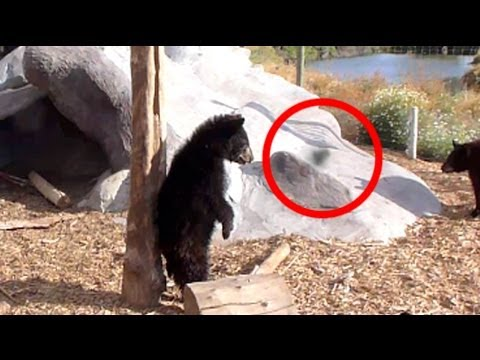 Ghost Chased By Angry Bear Cubs - YouTube