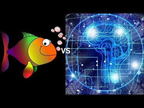 Alpha zero reacts super-dynamically | Sicilian Defence  Najdorf start position vs Stockfish: Game 17