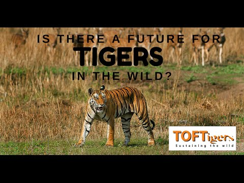 Is there a future for wild tigers?  TOFTigers 10th Anniversary lecture by Julian Matthews